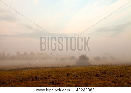 Tractor rides through the field covered with fog into abandoned apple-trees garden at dawn in front of forest