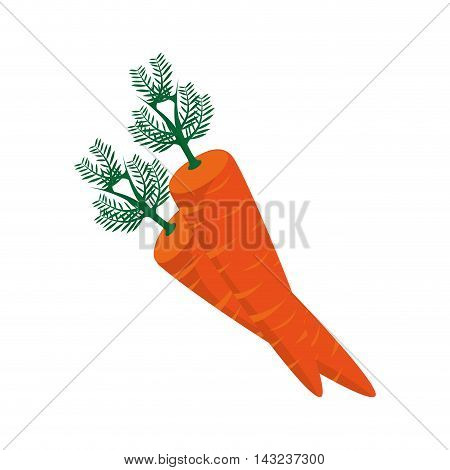 carrot vegetable cook food agriculture farm orange vector illustration