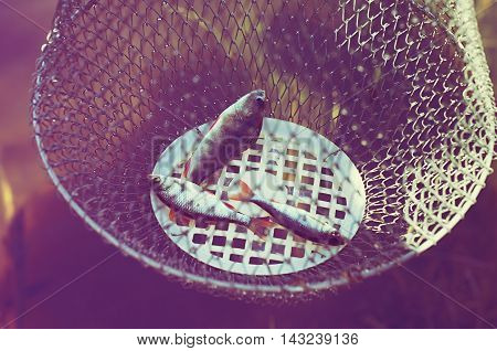 perch and roach in an iron cage vintage toning