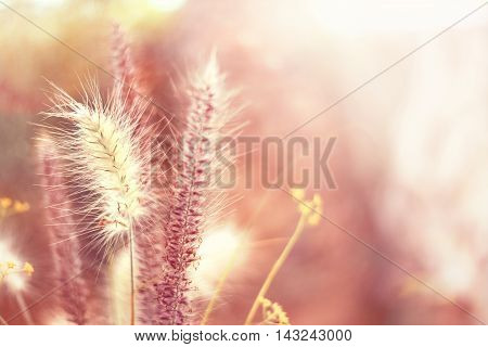 Various sorts of grasses with selective focus and copy space.