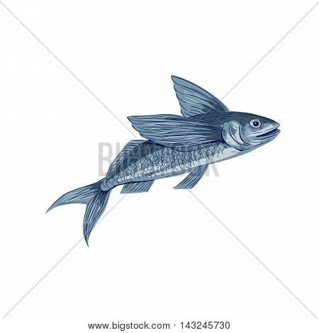 Drawing sketch style illustration of a flying fish or Exocoetidae a family of marine fish in the order Beloniformes class Actinopterygii viewed from the side set on isolated white background