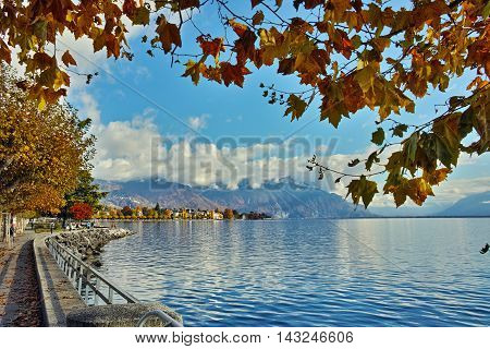 autumn tree in embankment of town of Vevey and Lake Geneva, canton of Vaud, Switzerland