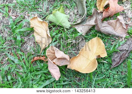 Dry leaves and leaf green drop on the grass : select focus with shallow depth of field : space for add text above and may be used as background