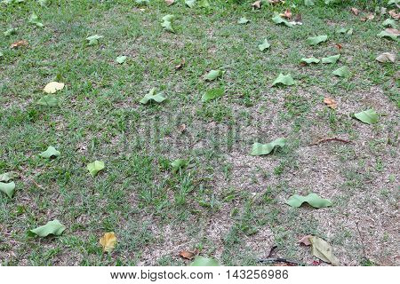 Dry leaves and leaf green drop on the grass : select focus with shallow depth of field : space for add text above and may be used as background :
