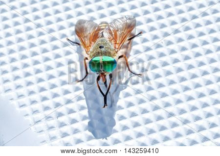Multicolored fly washes on plastic boat surface