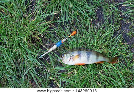 perch fishing float lie on green grass
