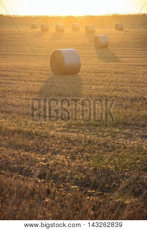 Summer landscape.Alta Murgia Nationa Park :sunrise with bales of hay. - (Apulia) ITALY