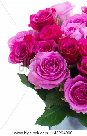 bouquet of pink and magenta fresh blooming roses in can close up isolated on white background