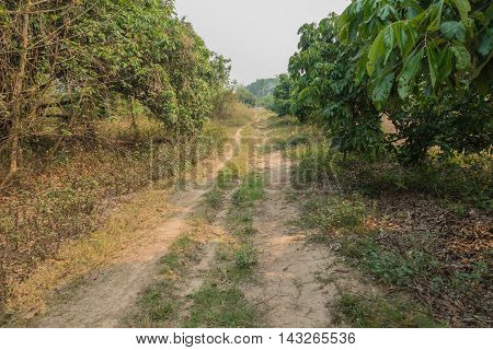 passage in the longan orchard on nature