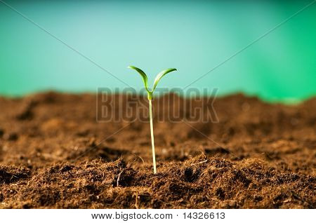 Green seedling illustrating concept of new life