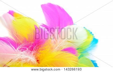 multicolored bright feathers isolated on white background.