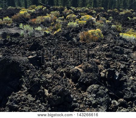 Bright colored brush grows in the lava fields at Lava Butte in Central Oregon.