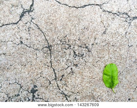 Cracked grunge concrete floor road with one green leaf