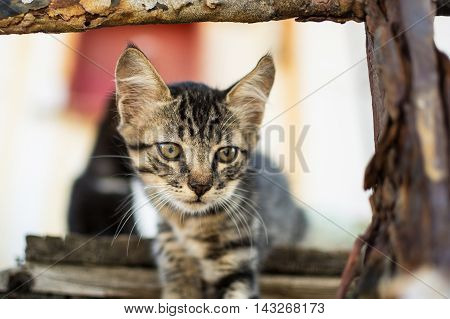 Cute Tabby Cat on Old Wooden Pallet. Little Cat on Abandoned Old Rusty Ship.