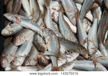 fish goatfish huge amount of cleaning washed