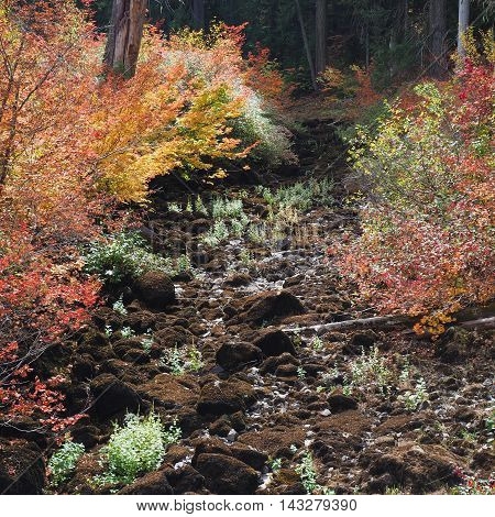 An old lava river bed in Oregon is enhanced by the fall foliage growing out of it.