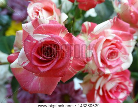 Bouquet of roses flowers bud red white nature garden petals color cultivation celebration gift event flora botany nature care season summer autumn hybrid