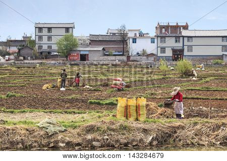 Heqing, China - March 16, 2016: Farmers Working In The Fields In Heqing In Yunnan