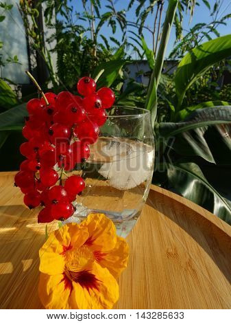 Cold iced beverage on bamboo tray decorated by redcurrant and nasturtium Tropaeolum. In the background are tropical plants like canna lilies. Evening mood at sunset.