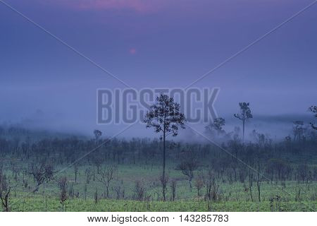 Sunrise and morning mist with silhouette trees and savanna filed at Thing Salaeng Luang National park, Thailand