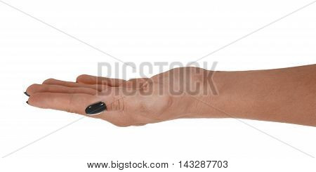 Open hand giving something, adult woman's skin, black manicure. Isolated on white background.