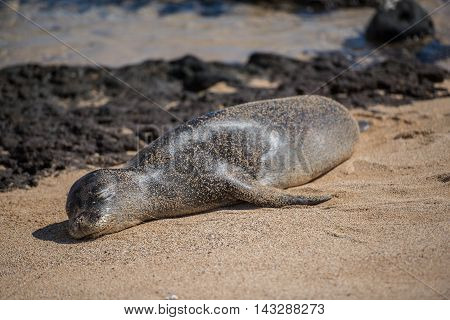 A seal lounges on a warm sunny beach