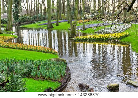 Flowerbed with tulips and yellow daffodil flowers blooming in spring garden and river view