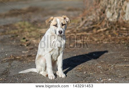 Portrait of sweet stray puppy sitting an a sunny street