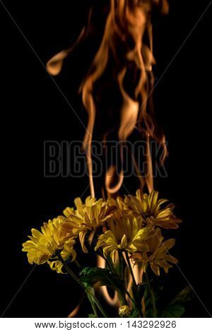 Yellow Flower On Fire