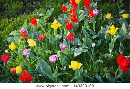 Forest Glade With Colored Flowers At Summer