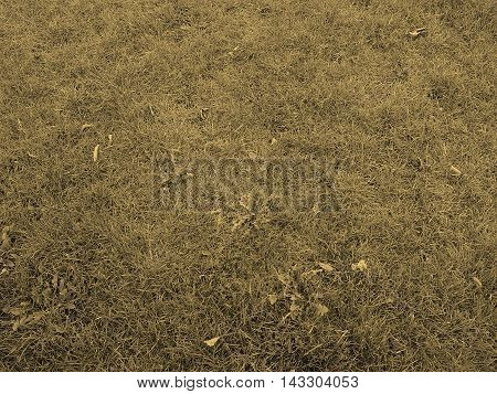 Grass Meadow Background Sepia