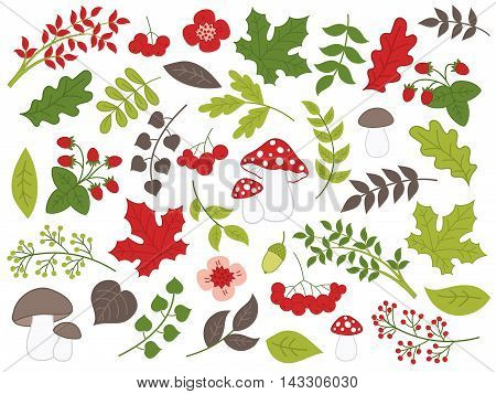 Vector forest summer set with mushrooms, leaves and berries
