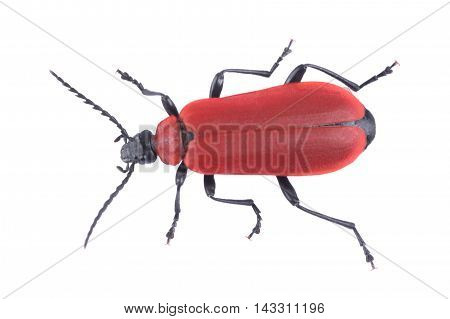 Red beetle isolated on a white background