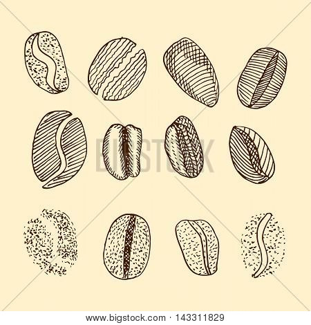 sketch of coffee beans. vector drawing set