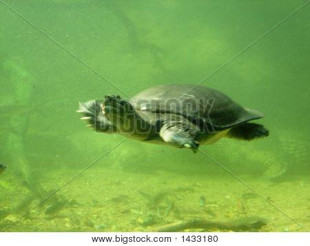 turtle tortoise tortoise in water deep