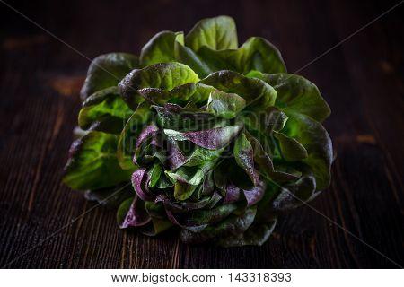 Organic Red Oakleaf lettuce on dark wooden background. Close up.