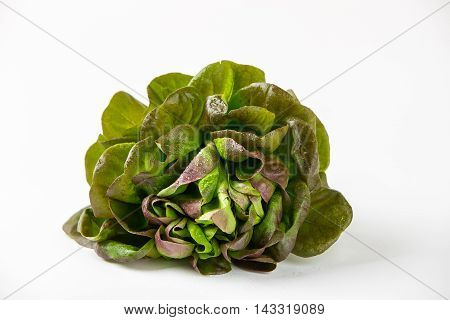 Organic Red Oakleaf lettuce isolated on wite background. Close up.
