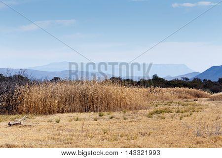 Reeds By The Mountain - Graaff-reinet Landscape