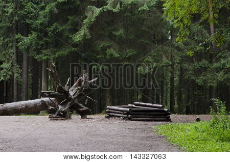 Beautiful scenery in the forest fallen tree and well