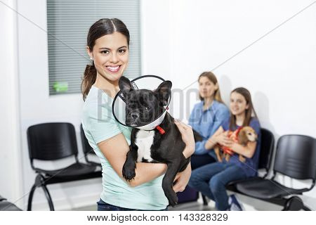 Happy Woman Holding French Bulldog With Cone In Clinic