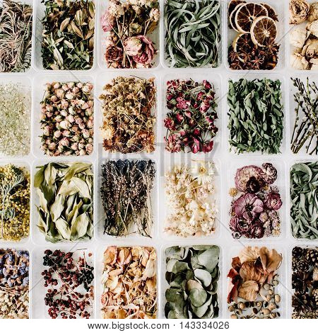 Various of dried tea flowers leaves and petals in boxes on white. flat lay top view