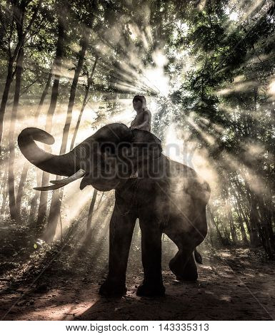 Silhouette elephant trekking through in rays of light, Thailand.
