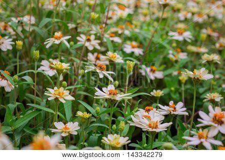 White flower bloom elegant in the field.