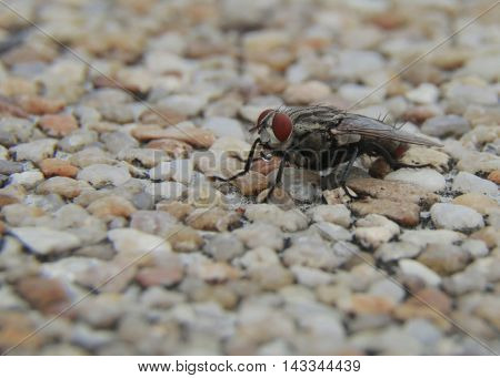 macro of big fly are spraying water on stone.