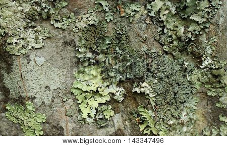 Close up of lichen and fungi on a tree.