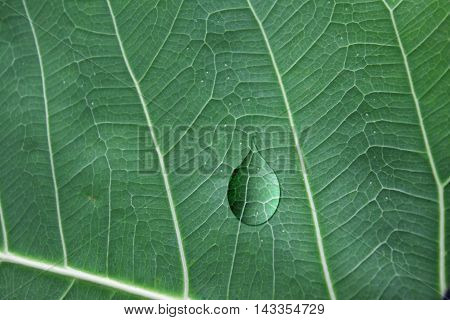 water droplets on a green leaf drops, background, macro, droplet,