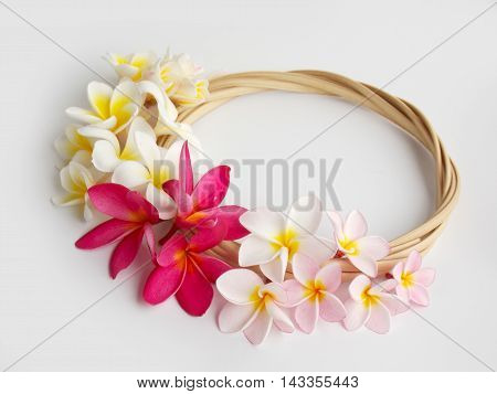 Beautiful tropical frangipani flower on white background