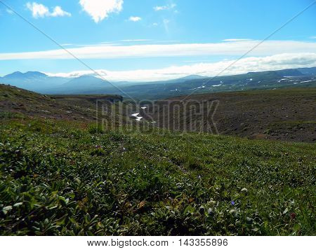 Summer meadow in sunny weather on Kamchatka