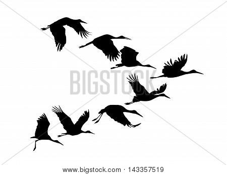 Storks flock. Vector silhouette black on white