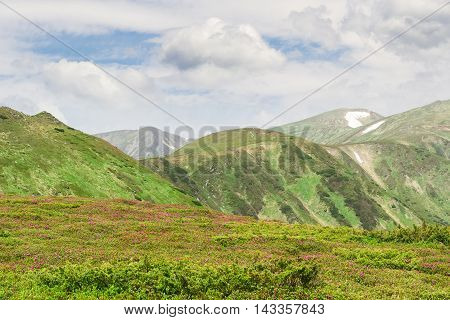 Mountain ranges with glade of rhododendrons in the foreground against the background of a sky with clouds